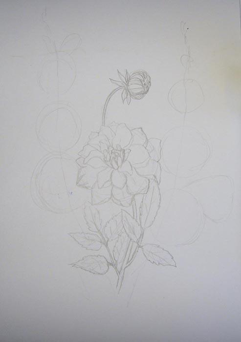 Детально прорисуйте георгин, его бутон и листья