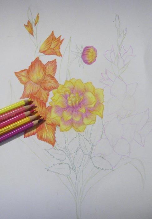 Оставшуюся не закрашенной часть лепестков георгина затонируйте розовым карандашом
