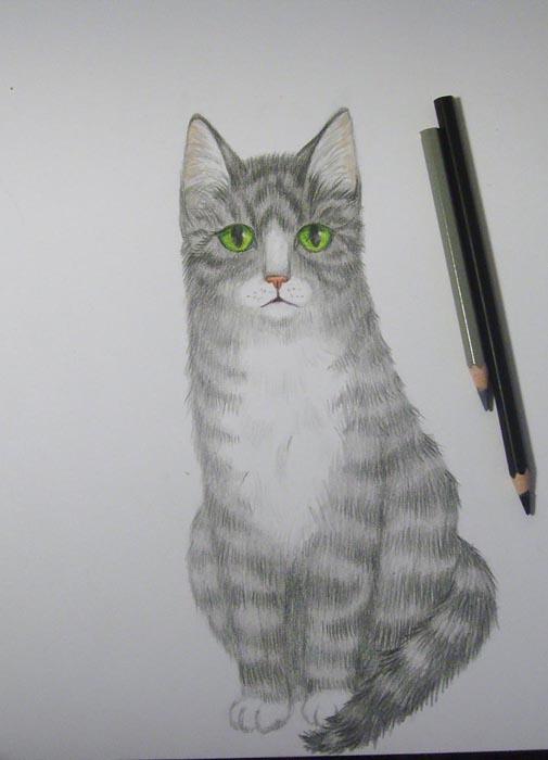 Нарисуйте полоски на теле животного черным карандашом. На белой грудке изобразите отдельные волоски серым карандашом