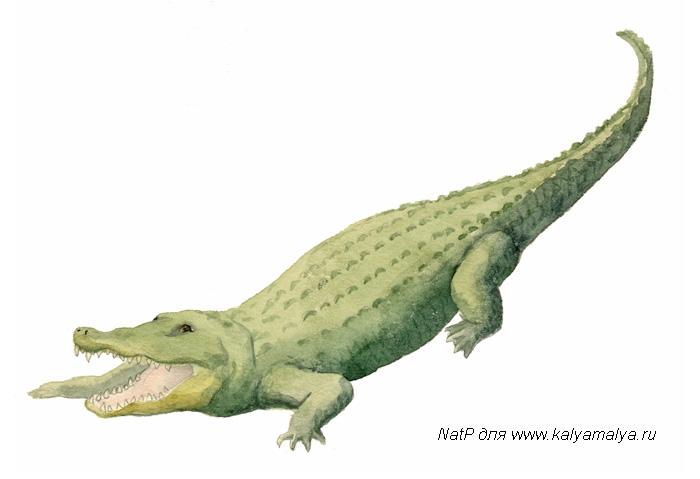 Учимся рисовать. Крокодил