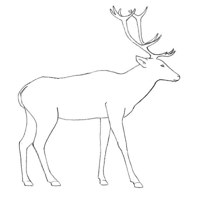 как рисовать оленя карандашом:
