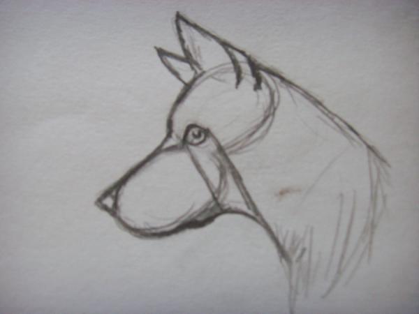 Изобразите глаз, нарисуйте шею и второе ухо