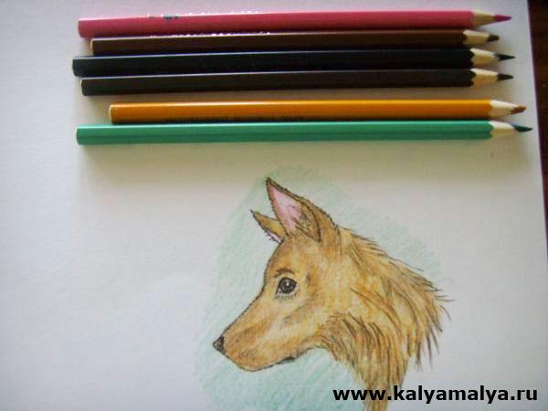 Сотрите ластиком карандашные линии и раскрасьте голову