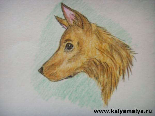 Как нарисовать голову собаки?