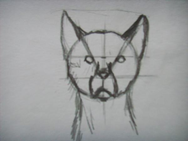 Нарисуйте уши и шею