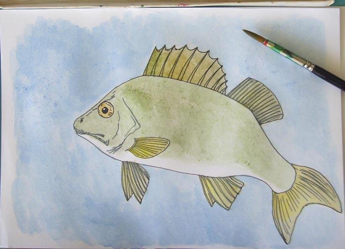Глаз рыбы закрасьте коричневой краской, плавники – желтой. Тело окуня раскрасьте смесью зеленой и коричневой краски