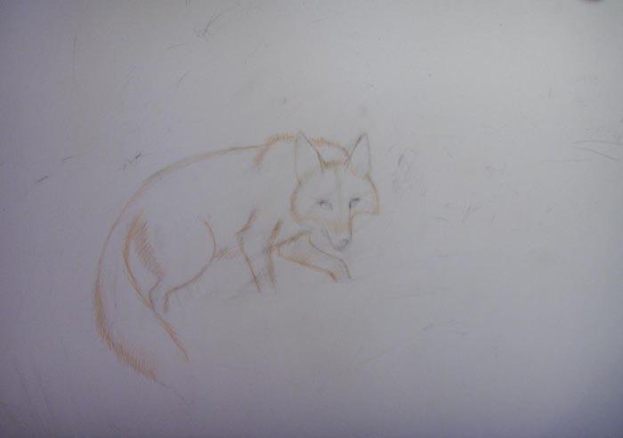 Обведите контуры лисы оранжевым карандашом