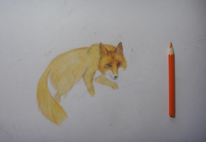 Светло оранжевым уветом затонируйте туловище, лапы и хвост