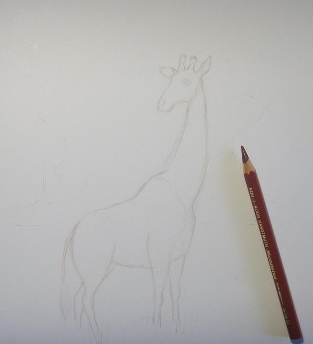 Коричневым карандашом обведите контуры жирафа