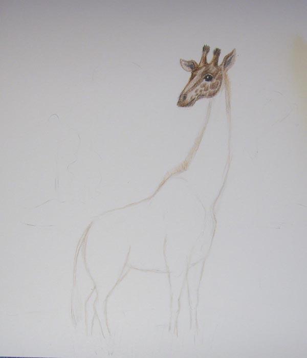 Мордочку зверя закрасьте светло-коричневым цветом, а затем нарисуйте на ней пятна темно-коричневым карандашом