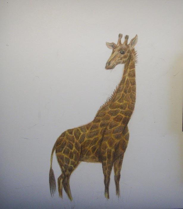 Закрасьте все тело жирафа