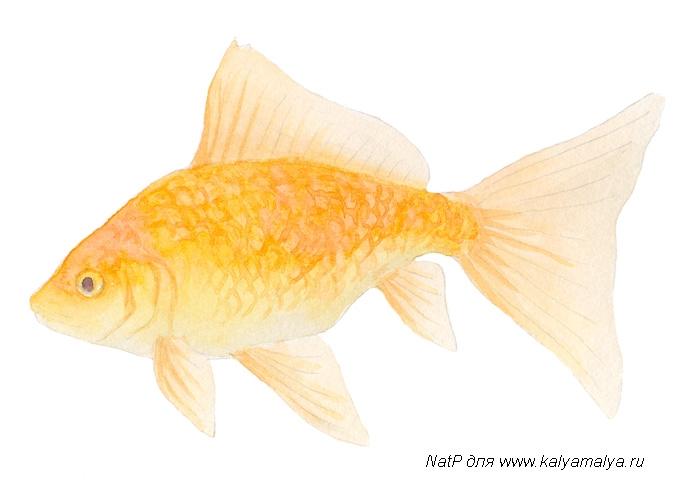 Учимся рисовать. Золотая рыбка