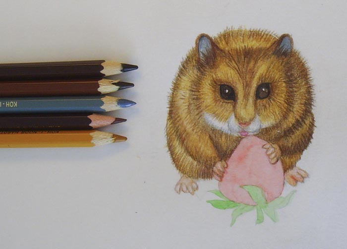 Раскрасьте теми же карандашами и вторую половину тела хомяка
