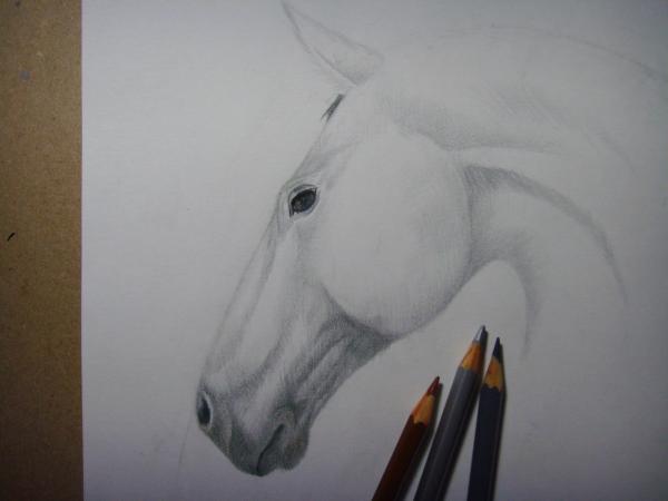 Начните раскрашивать голову лошади