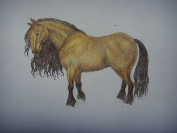 Раскрасьте гриву и хвост коня черным карандашом