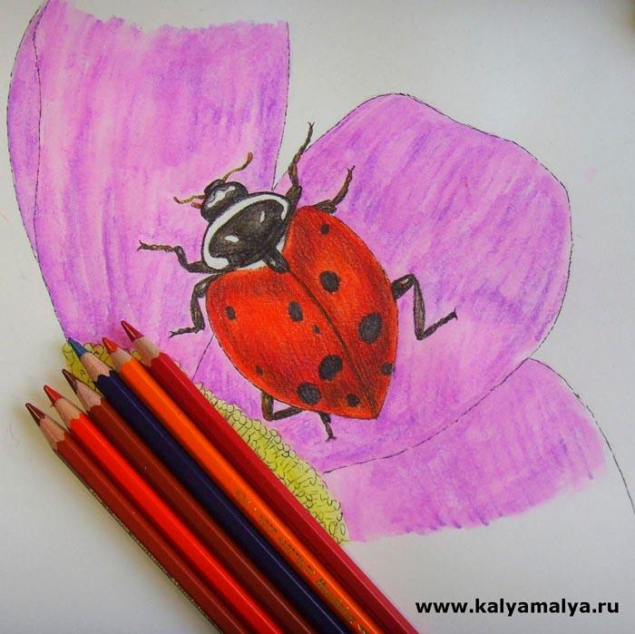 Раскрасьте тело насекомого и сделайте тень