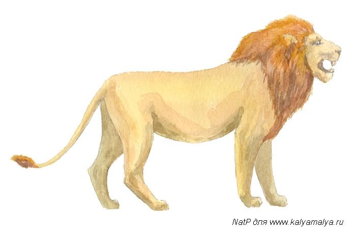 Учимся рисовать. Лев