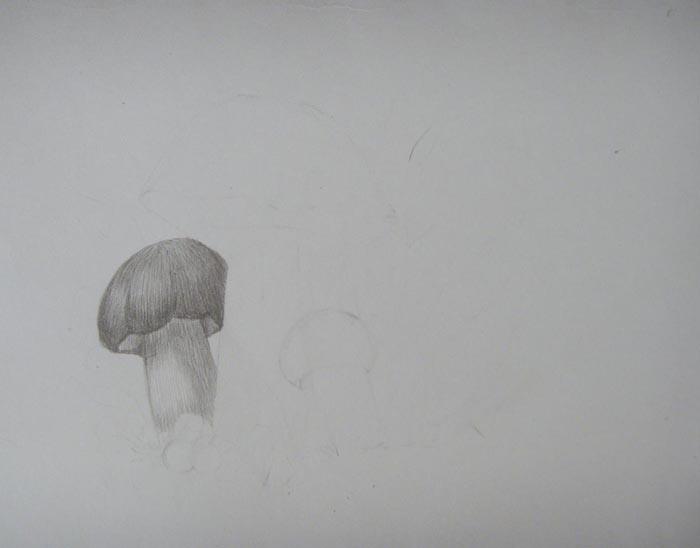 Заштрихуйте карандашом гриб средних размеров