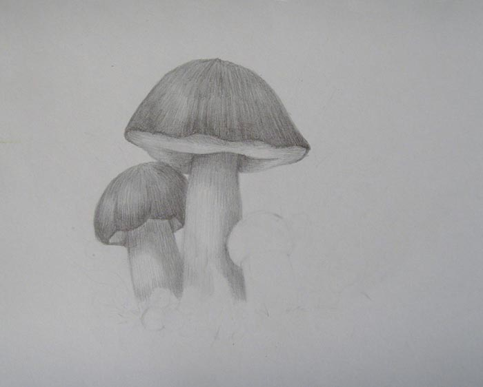 Заштрихуйте шляпку белого гриба
