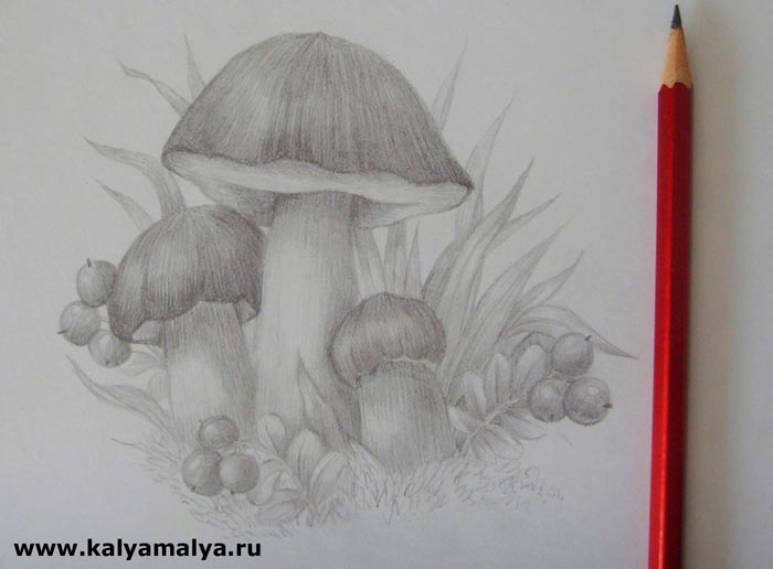 Прорисуйте травинки и ягоды брусники, которые окружают белые грибы