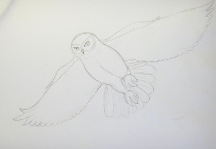 Нарисуйте крылья птицы