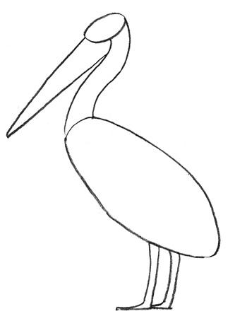 Пеликан