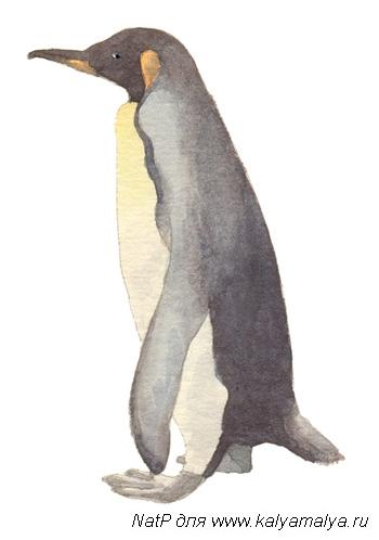 Учимся рисовать. Пингвин
