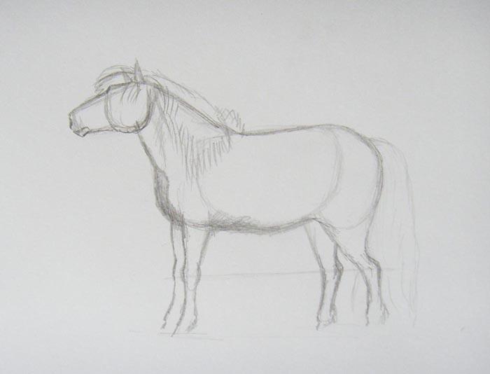 Более детально прорисуйте голову лошади. Изобразите длинный пышный хвост и объемную гриву с челкой