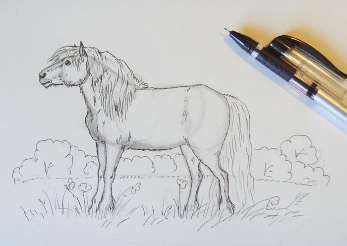 Черной ручкой обведите все карандашные контуры