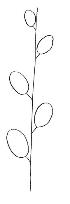 Веточка вербы