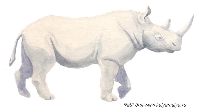 Учимся рисовать. Носорог