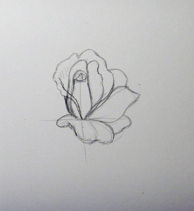 В нижней части розы сделайте лепестки немного короче