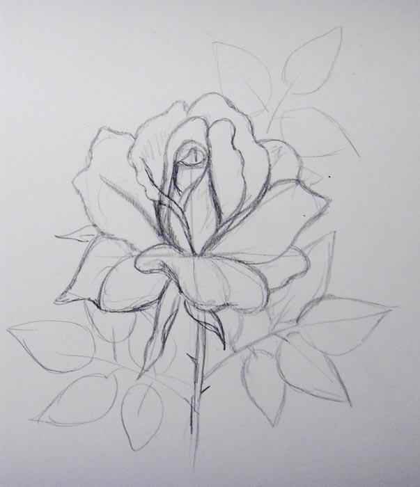 Изобразите стебель и листья розы