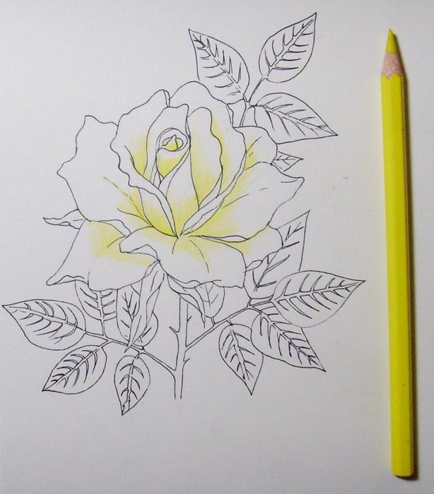 Жёлтым карандашом заштрихуйте нижнюю часть лепестков