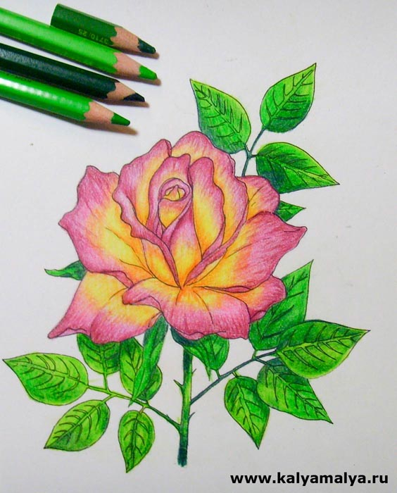 Закрасьте листки и стебель цветка