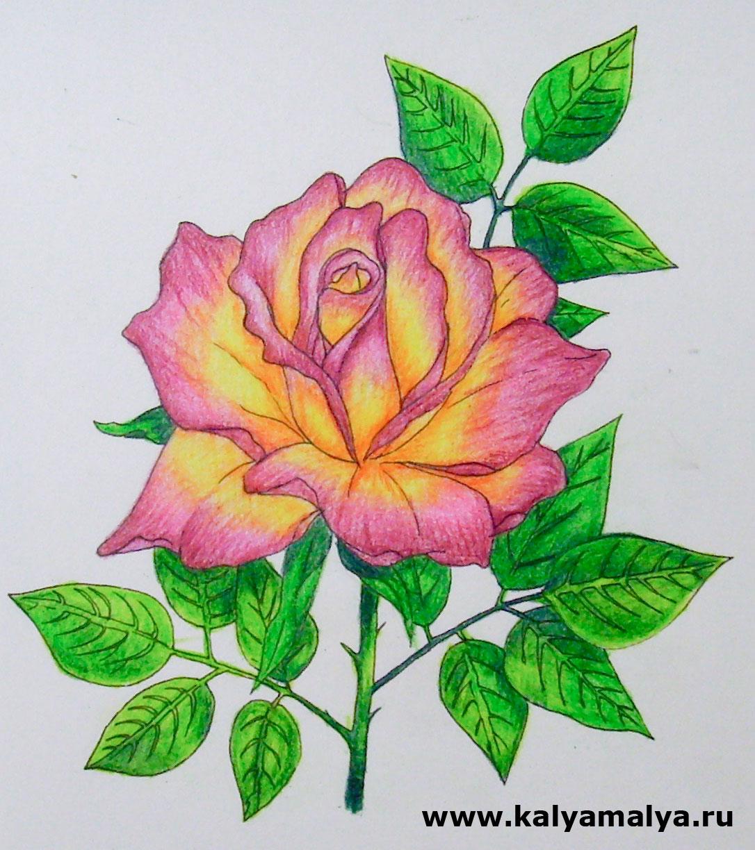 Цветы розы рисунки 80