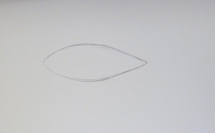 Карандашом нарисуйте очертания тела тюленя, которое по форме напоминает перевернутую каплю