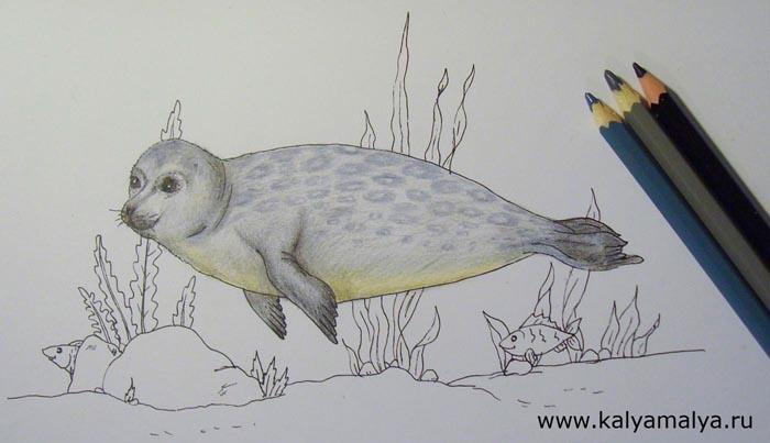 Серым карандашом закрасьте хвост тюленя, а черным углубите тени на нем. Затем раскрасьте серым карандашом туловище тюленя, изобразив на нем небольшие пятнышки