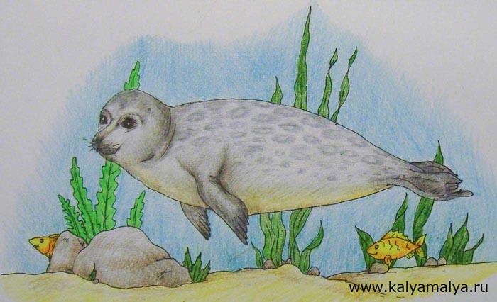 Как нарисовать тюленя?