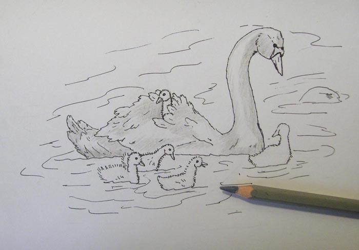 Удалите с помощью ластика карандашный набросок. Серым карандашом немного затонируйте тело лебедя