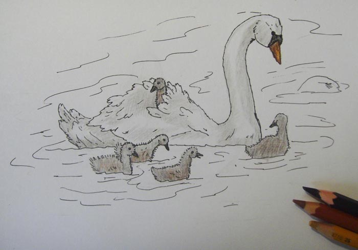 Светло-коричневым, черным и красно-коричневым затонируйте клюв лебедя
