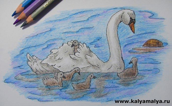 Серым карандашом затонируйте отражения в воде, которые падают от лебедят и лебедя