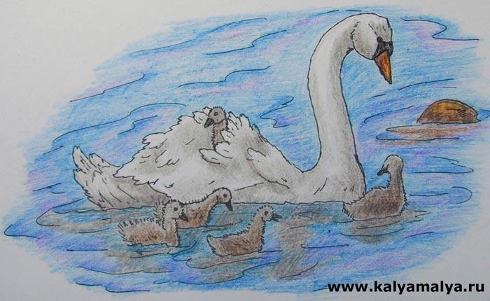 Как нарисовать лебедя?