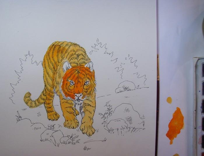 Оранжевой краской начните раскрашивать тигра