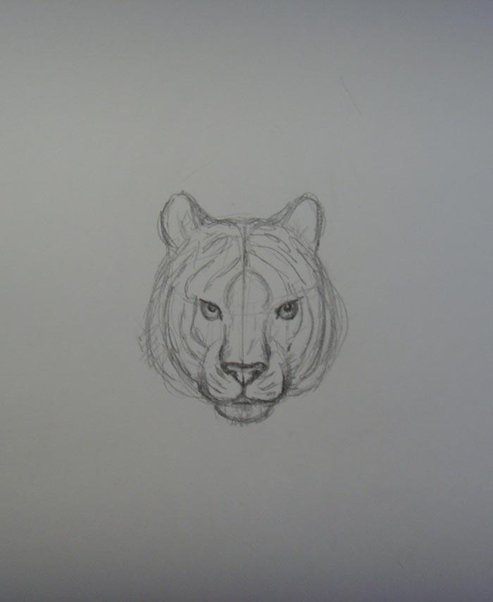Прорисуйте морду тигра
