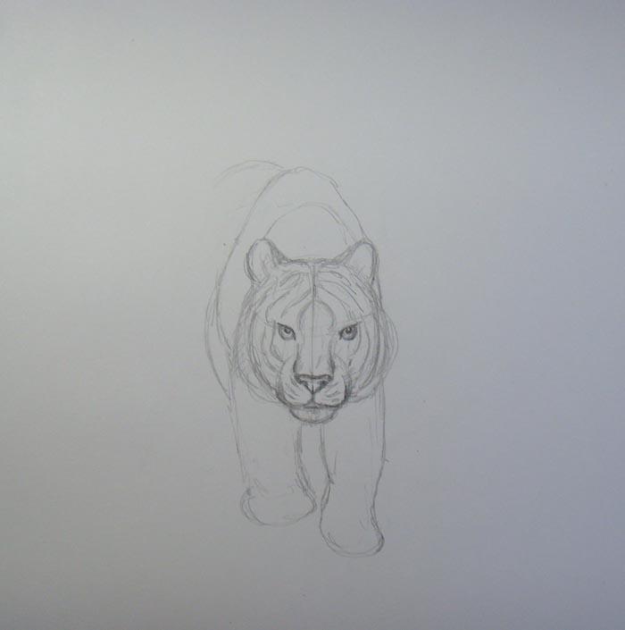Обозначьте очертания передних лап зверя и верхней части его туловища