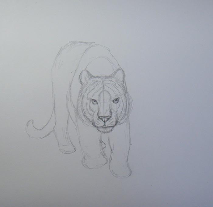 Пририсуйте заднюю часть туловища, лапы и хвост тигра