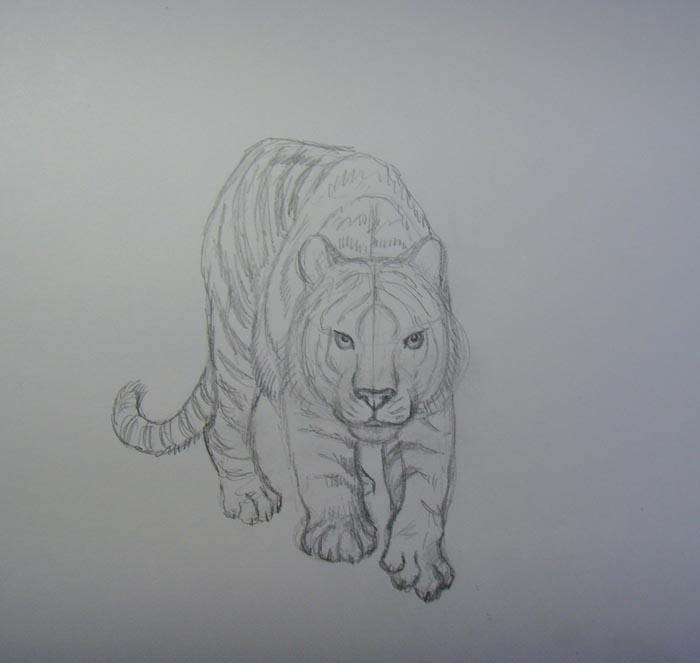 Прорисуйте полоски и пальцы на лапах зверя
