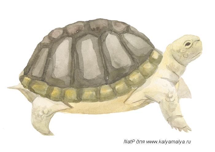 Учимся рисовать. Черепаха