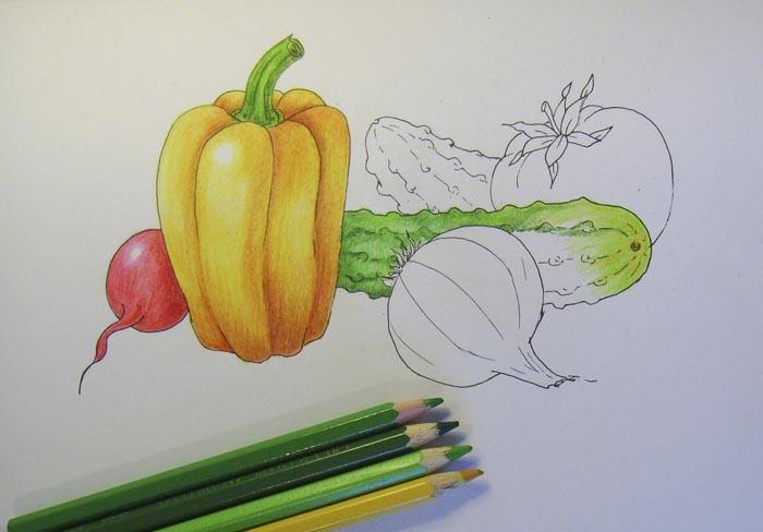Начните раскрашивать огурцы, используя для этого желтый и зеленые карандаши